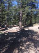 Stroppy theo Yosemite