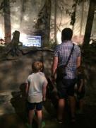 Tyrrell Museum2